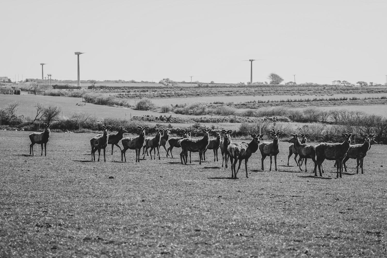 Agriculture Photography Devon