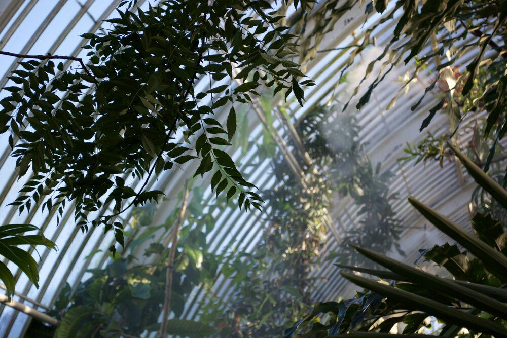 The view inside a greenhouse in Kew Gardens