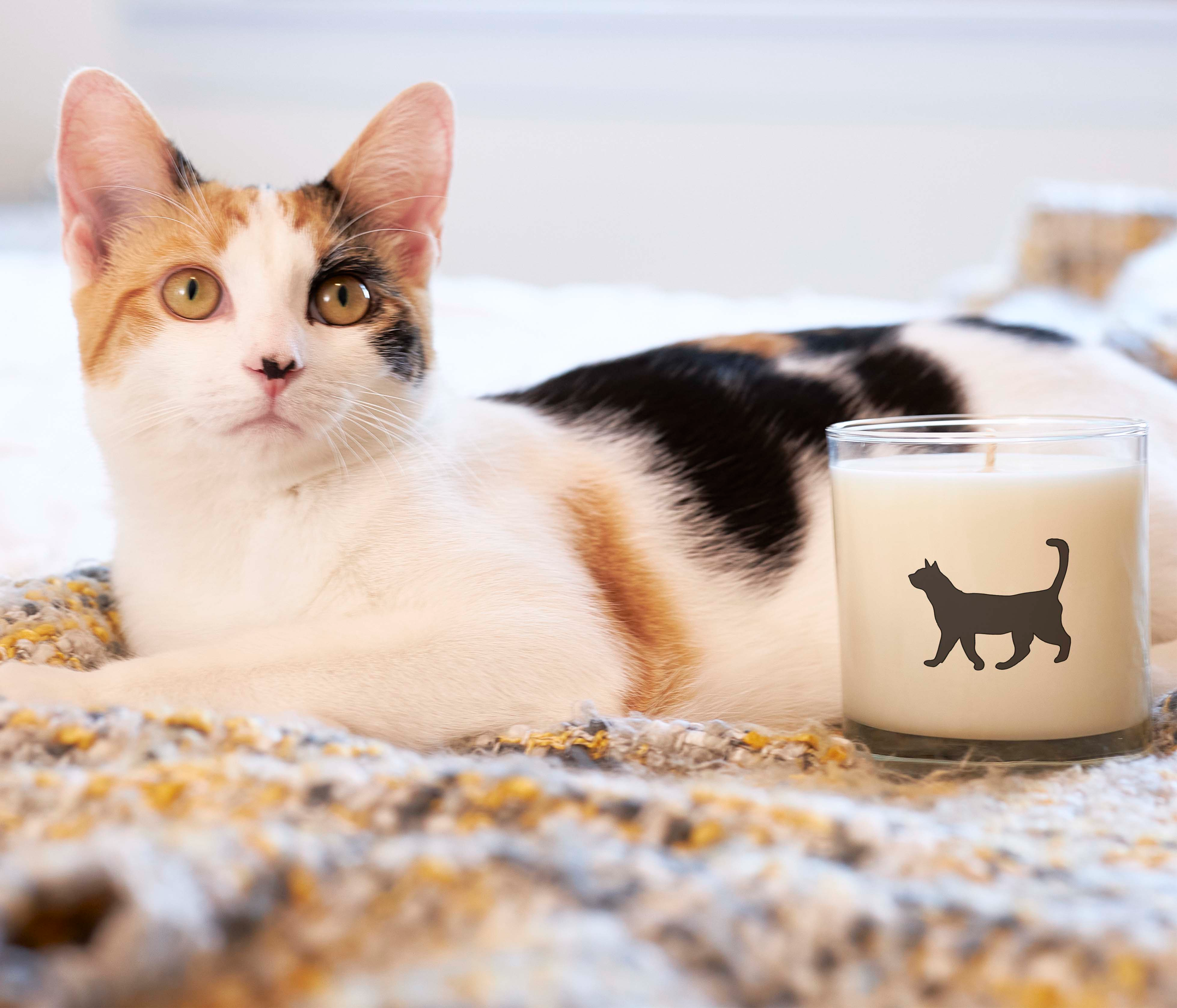 Scripted Fragrance x North Shore Animal League Cat Rescue Dog Soy Candles Pet Collection Charity Pet Gift Cat Mom